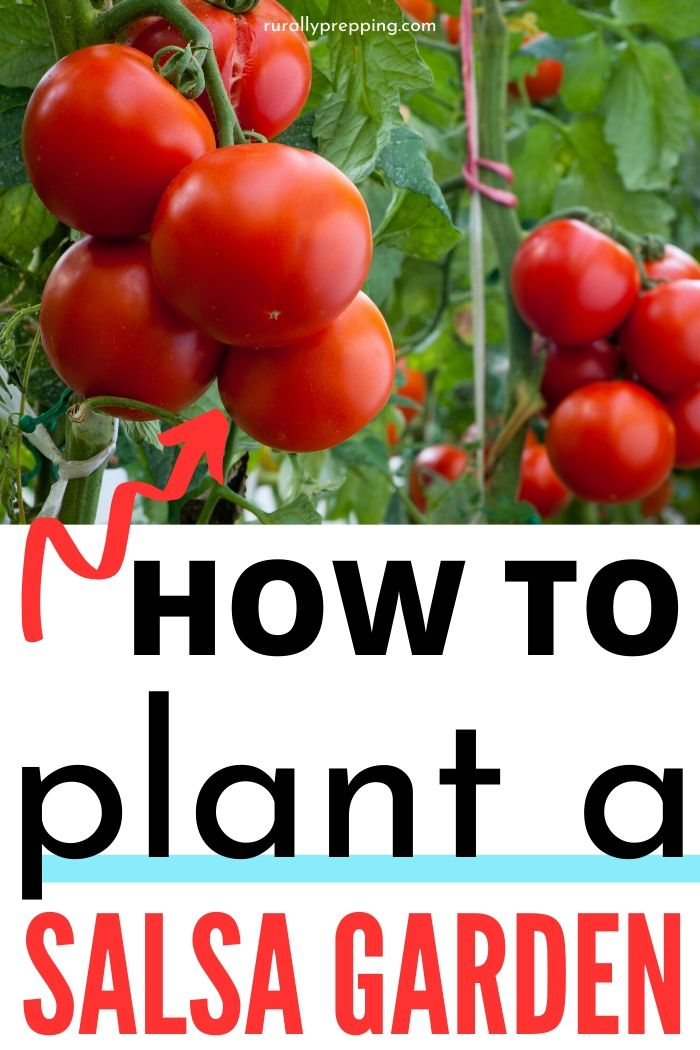 tomato plants in an image that says how to plant a salsa garden