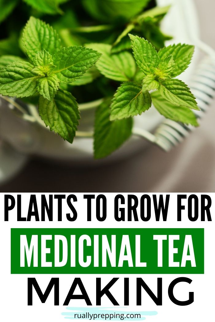 mint plant in a pot that has text below it that says plants to grow for medicinal tea making