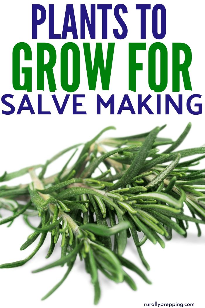 a spring of rosemary with text above it that says plants to grow for salve making