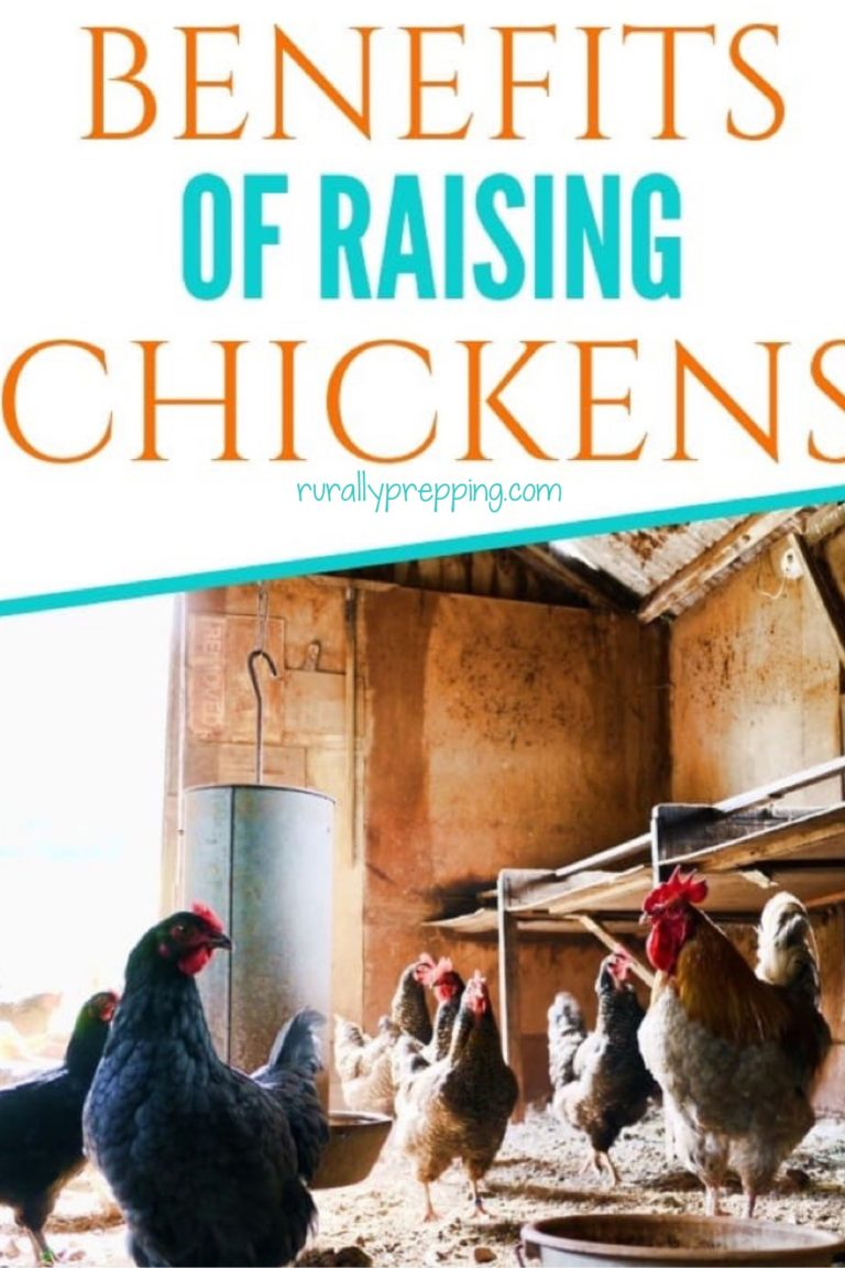 an image of chickens in a chicken coop with the text benefits of raising chickens on top