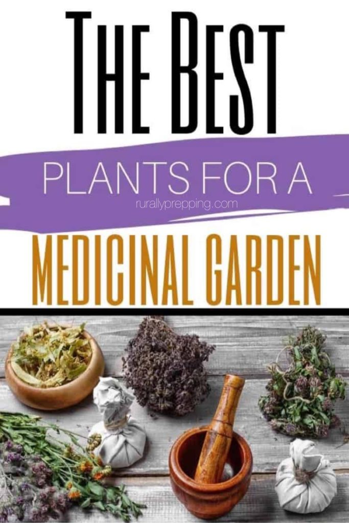 various dried medicinal plants with the text the best plants for  a medicinal garden over them.