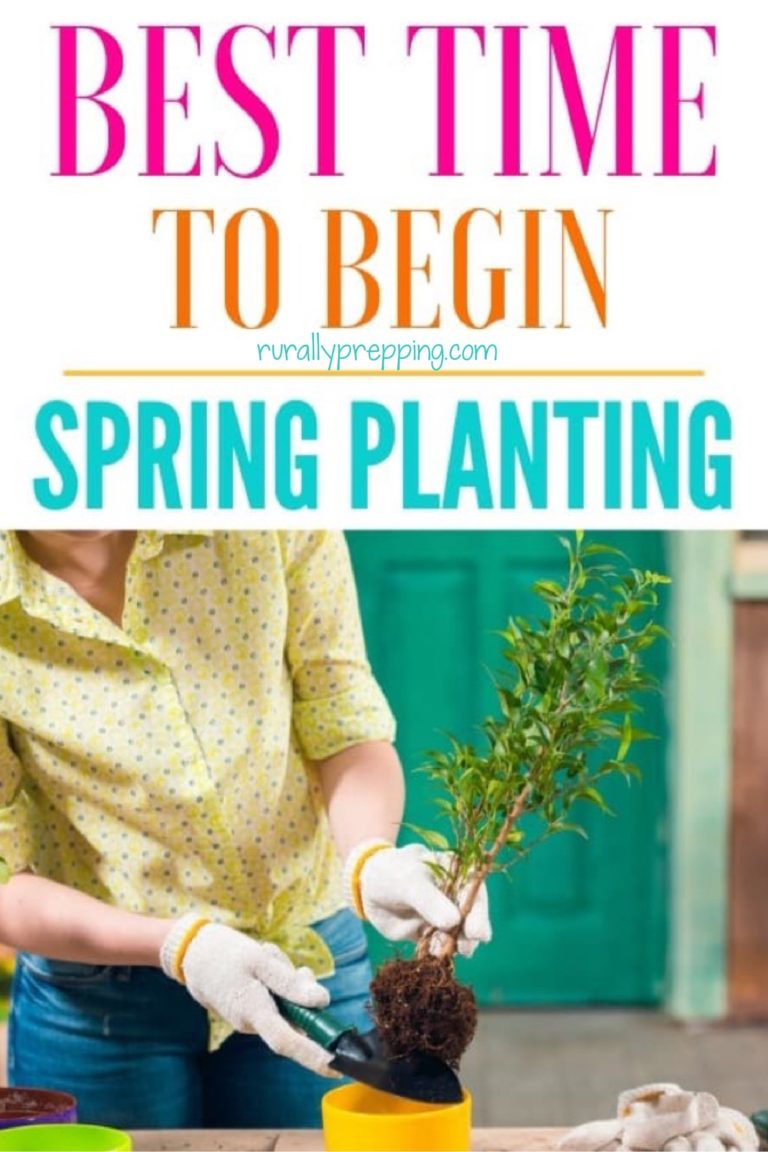 a lady in a yellow shirt wearing gloves while planting a plant with text on top that says best time to begin spring planting