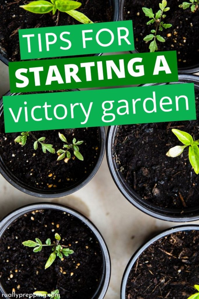 tomato seedlings in little pots with tips for starting a victory garden across them
