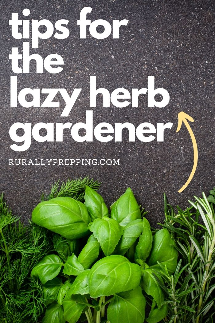 a variety of herbs with the text tips for the lazy herb gardener above them